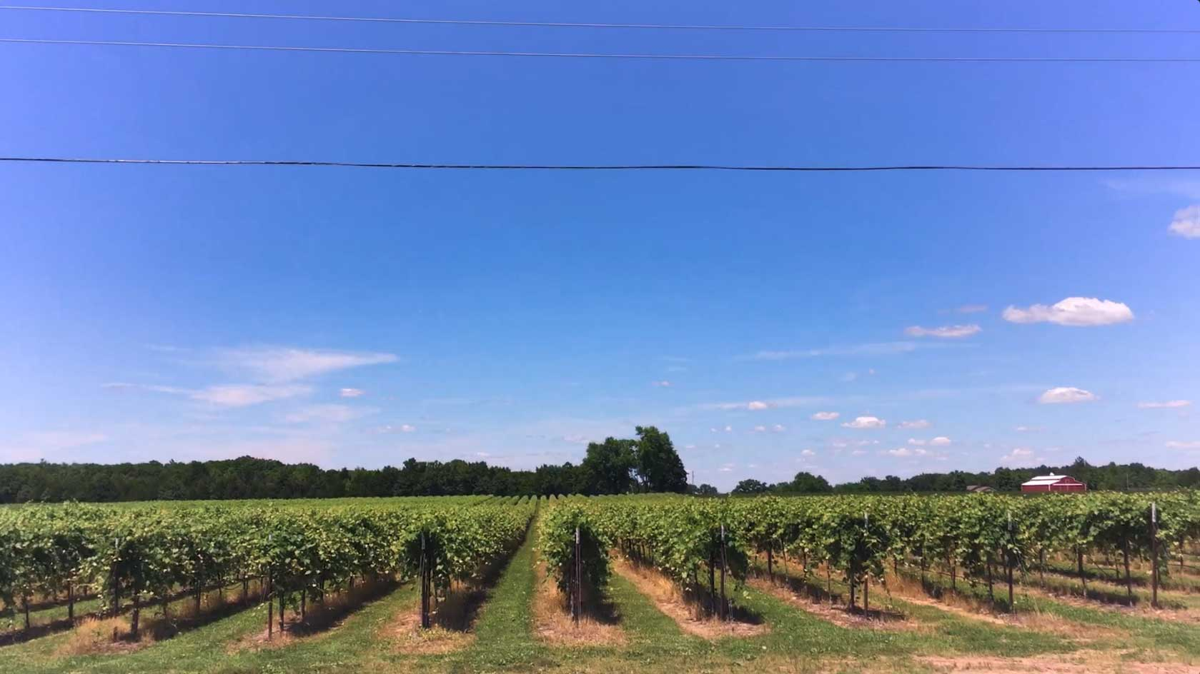 Winery vineyard photo under a blue sky - St. James Winery Missouri