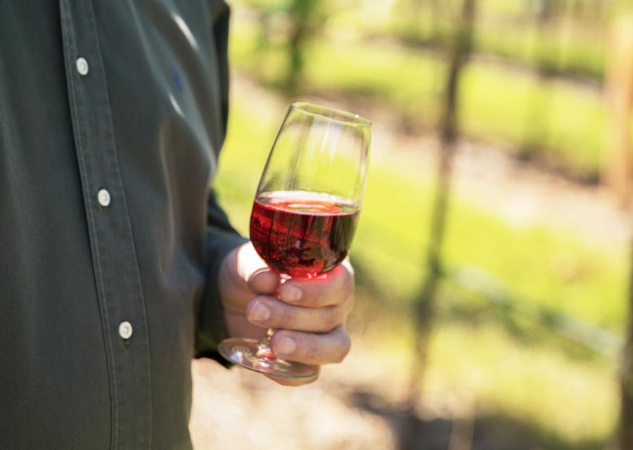 A glass of sweet wine is held in the vineyard - St. James Winery